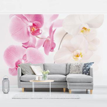 Produktfoto Tapete selbstklebend - Delicate Orchids - Fototapete Querformat