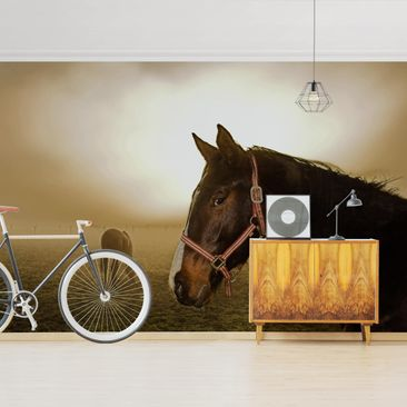 Product picture Photo Wall Mural - Early Horse -...