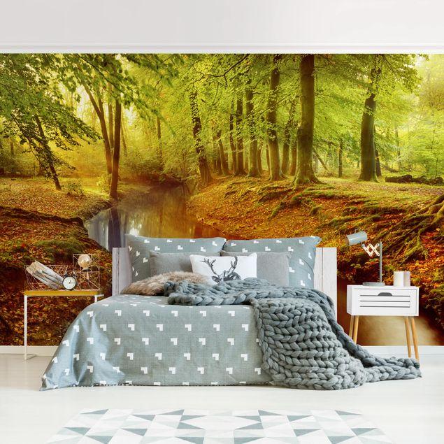 Produktfoto Tapete selbstklebend - Herbstwald - Fototapete Querformat
