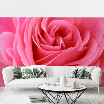 Product picture Photo Wall Mural - Lustful Pink Rose -...
