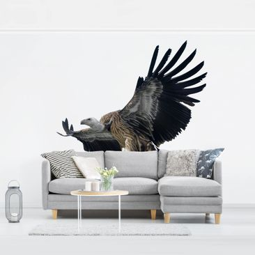 Product picture Photo Wall Mural - Majestic Vulture -...