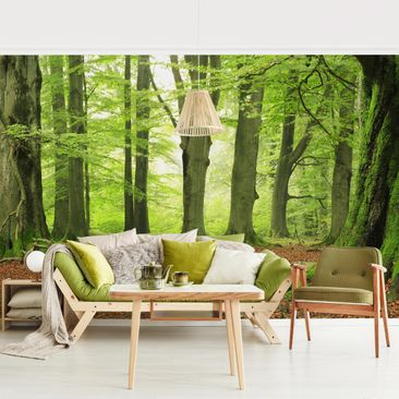 Product picture Photo Wall Mural - Mighty Beech Trees -...