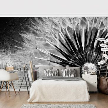 Product picture Photo Wall Mural - Dandelion Black &...