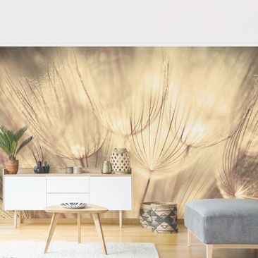 Product picture Photo Wall Mural - Dandelions Close-Up...