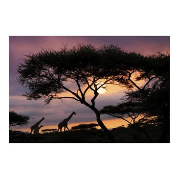 Product picture Photo Wall Mural - African Safari -...