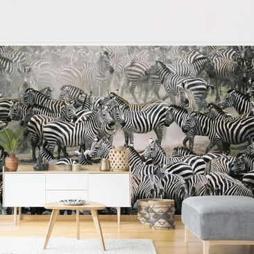 Product picture Photo Wall Mural - Zebra Herd -...