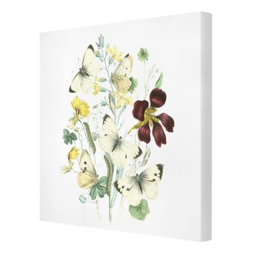 Product picture Canvas Art - British Butterflies II -...