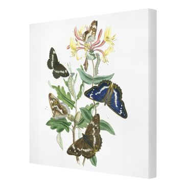 Product picture Canvas Art - British Butterflies IV -...