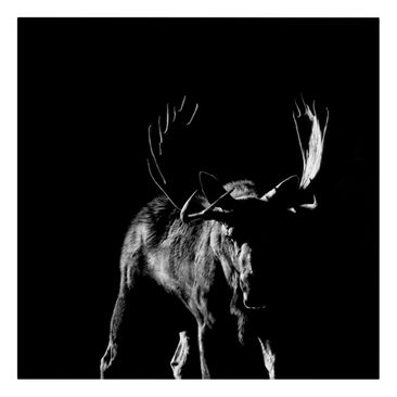 Product picture Canvas Art - Bull In The Dark - Square...