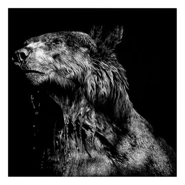 Product picture Canvas Art - Bear In The Dark - Square...