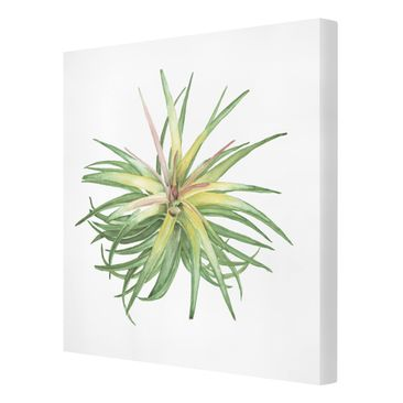 Product picture Canvas Art - Air Plant Watercolor III -...