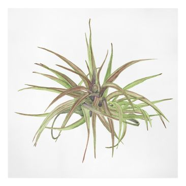Product picture Canvas Art - Air Plant Watercolor II -...