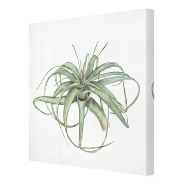 Product picture Canvas Art - Air Plant Watercolor I -...