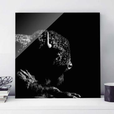 Produktfoto Glasbild - Bison vor Schwarz - Quadrat 1:1