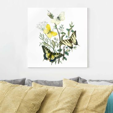 Product picture Print on Glass - British Butterflies III...