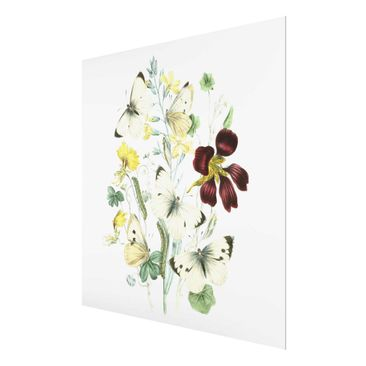 Product picture Print on Glass - British Butterflies II...