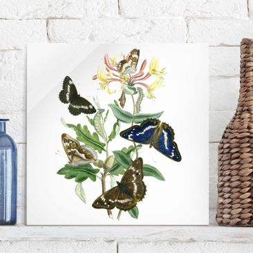 Product picture Print on Glass - British Butterflies IV...