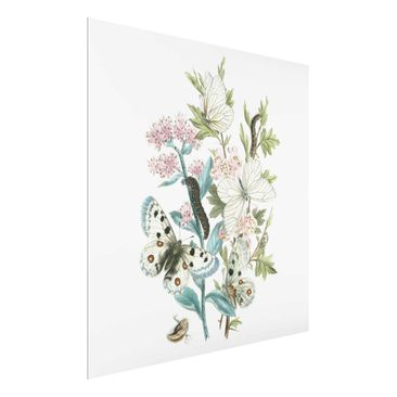 Product picture Print on Glass - British Butterflies I -...