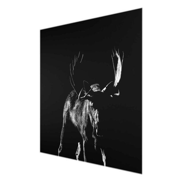 Produktfoto Glasbild - Bulle vor Schwarz - Quadrat 1:1