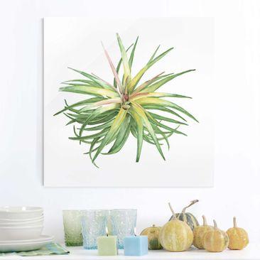 Produktfoto Glasbild - Luftpflanze Aquarell III - Quadrat 1:1