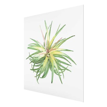 Product picture Print on Glass - Air Plant Watercolor...