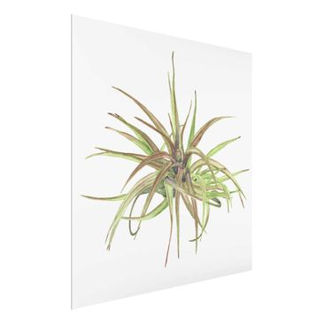 Product picture Print on Glass - Air Plant Watercolor II...