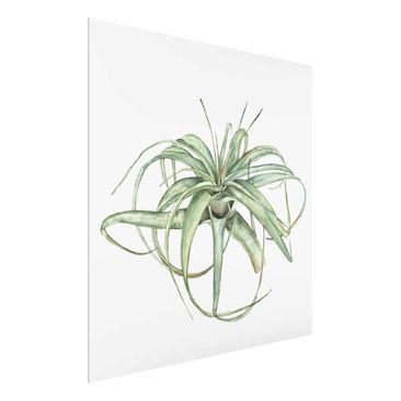 Product picture Print on Glass - Air Plant Watercolor I...