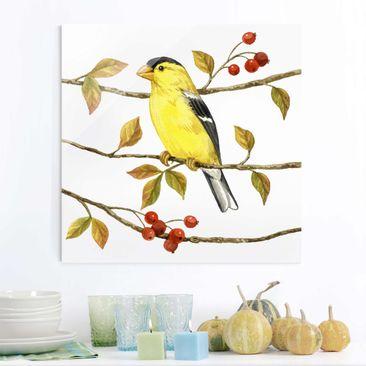 Produktfoto Glasbild - Vögel und Beeren - Goldzeisig - Quadrat 1:1