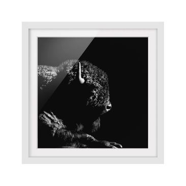 Product picture Framed print - Bison In The Dark -...