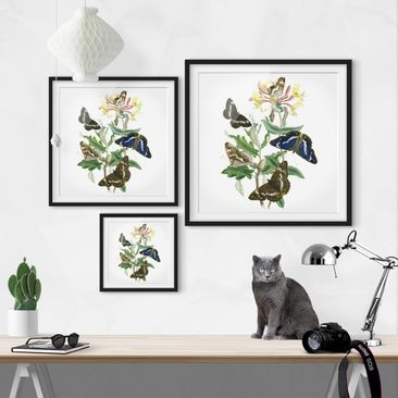 Product picture Framed print - British Butterflies IV -...