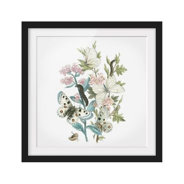 Product picture Framed print - British Butterflies I -...