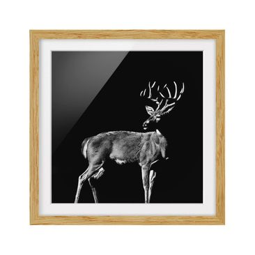 Product picture Framed print - Deer In The Dark - Square...