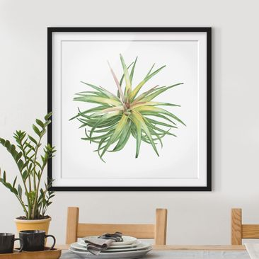 Produktfoto Framed print - Air Plant Watercolor III...