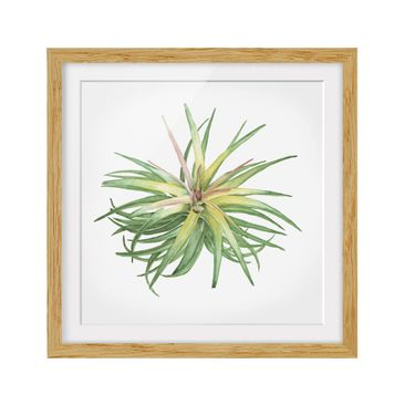 Product picture Framed print - Air Plant Watercolor III...