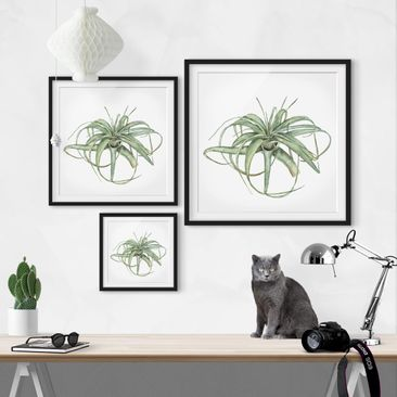 Product picture Framed print - Air Plant Watercolor I -...