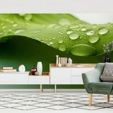 Produktfoto Tapete selbstklebend - Drops of Nature - Fototapete Querformat