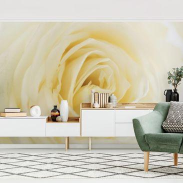 Produktfoto Tapete selbstklebend - White Rose - Fototapete Querformat