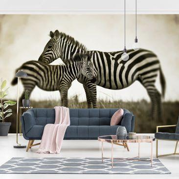 Produktfoto Tapete selbstklebend - Zebrapaar - Fototapete Querformat