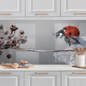 Produktfoto Küchenrückwand - Marienkäfer auf Hortensie vergrößerte Ansicht in Wohnambiente Artikelnummer 235682-XWA