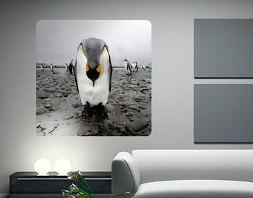 Product picture Wall Mural Penguin