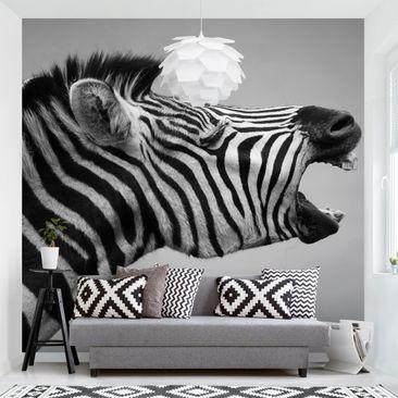 Produktfoto Tapete selbstklebend - Brüllendes Zebra II - Fototapete Quadrat