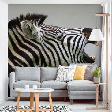 Produktfoto Tapete selbstklebend - Brüllendes Zebra - Fototapete Quadrat