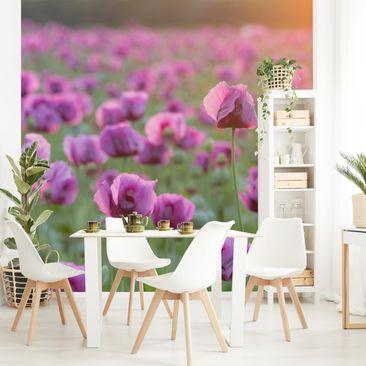 Produktfoto Tapete selbstklebend - Violette Schlafmohn Blumenwiese im Frühling - Fototapete Quadrat