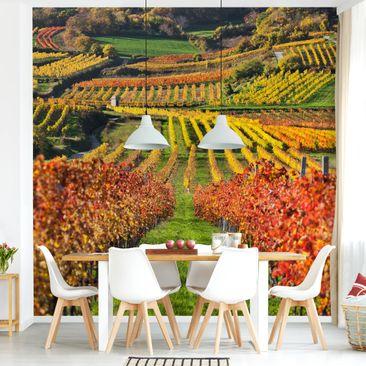 Produktfoto Tapete selbstklebend - Weinberg Blick - Fototapete Quadrat