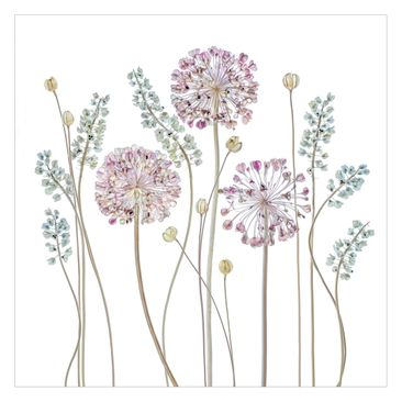 Produktfoto Fototapete - Allium Illustration - Fototapete Quadrat