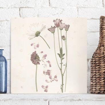 Produktfoto Leinwandbild - Herbarium in rosa II - Quadrat 1.1 vergrößerte Ansicht in Wohnambiente Artikelnummer 240796-XWA