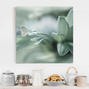 Produktfoto Leinwandbild - Schmetterling und Tautropfen in Pastellgrün - Quadrat 1-1 vergrößerte Ansicht in Wohnambiente Artikelnummer 245716-XWA