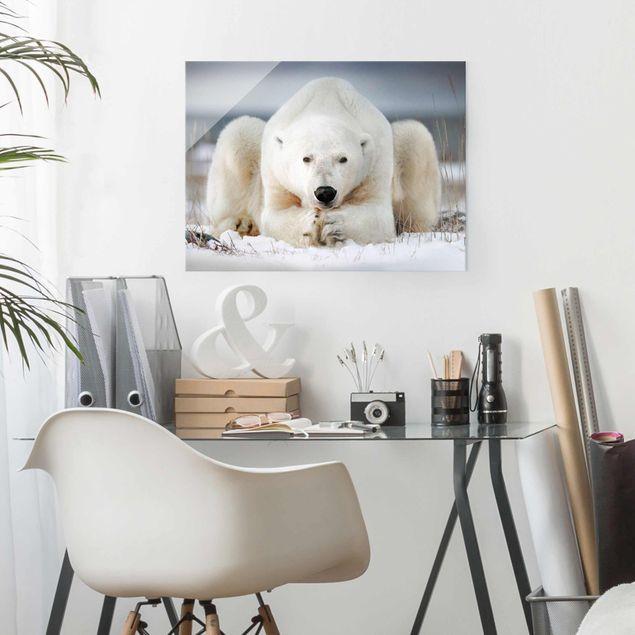Produktfoto Glasbild - Nachdenklicher Eisbär - Querformat 3:4