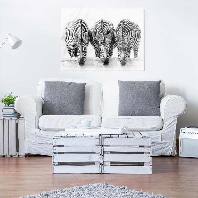 Produktfoto Glasbild - Zebra Trio schwarz-weiß - Querformat 3:4