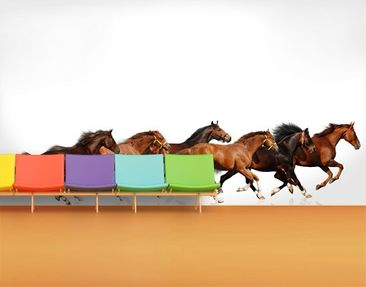 Produktfoto Photo Wall Mural Horse Drove 504x270cm